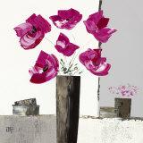 Pivoines Roses I