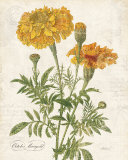 October Marigold