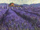 Lavender Fields I