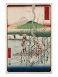 Sagami River  Shoshu
