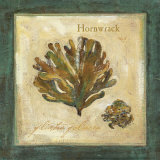 Hornwrack
