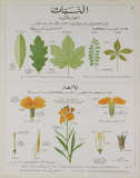 Plants and Leaves Teaching Chart