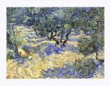 Olive Orchard  c1889