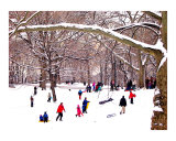 Snow Sledding in Central Park