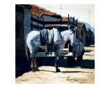 Mule in Pueblo
