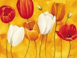 Festa di Tulipani