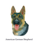 American German Shepherd