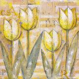 Mariels Tulips IV