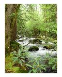 Greenbrier River Scene