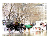 Horse and Carriage on a Post NYC Storm Day