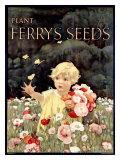 Ferry's Seeds