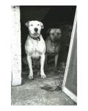 Mac & Sasha