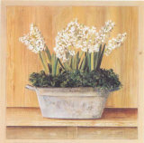 Les Fleurs Blanches  Jacinthes