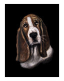 Bassett Hound