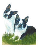 Two Are Better Than One - Boston Terriers