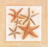 Etoiles de Mer III