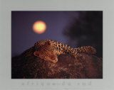 Leopard with Rising Moon