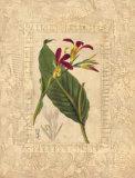 Estudio de Flores I