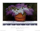 Lilacs Of Nantucket