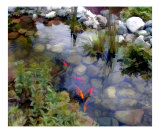 Garden Koi Pond