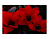 Mysterious Red Flowers