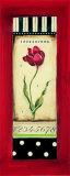 Belgian Tulip II