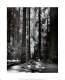 Redwoods  Founders Grove