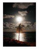 Lunar Palm