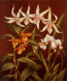 Orchid Trio I
