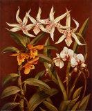 Orchid Trio I