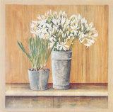 Les Fleurs Blanches  Agapanthes et Muscaris