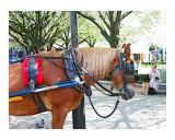 Horse Scene in Central Park