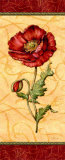 Red Passion Pavot