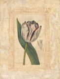 Tulipanes Bessa II