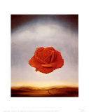 Rose Meditative  c1958