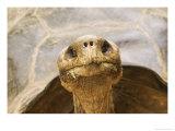 Race of Galapagos Tortoise  Giant Tortoise Breeding Center  Galapagos  Ecuador