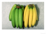 Green and Ripe Bananas