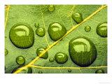 Acid Rainrain Drops on Leaf