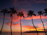 Coconut Palms and the Island of Lanai at Sunset from the Seawall on Front Street  Lahaina  Maui