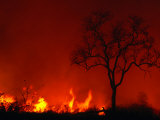 Veld Fire  Kruger National Park  Mpumalanga  South Africa