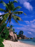 Palm Tree on Beach  Anse Source D&#39;Argent  Seychelles