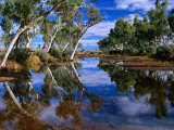 Creek Lined with River Red Gum Near Hermannsaburg  Northern Territory  Australia