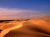 Animal Tracks on Sand Dune in Little Sahara Desert  Australia