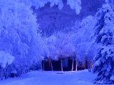 Alaskan Winter Frost  Alaska  USA