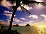 Palm Trees on the Beach at Sunset  Lanikai  USA