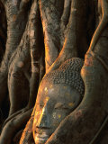 Buddha Head Inbedded in Roots at Wat Phra Mahathat  Ayuthaya  Thailand
