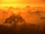 Morning Mist Over the Tambopata Candamo National Park  Amazonas  Peru