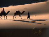 Camel Caravan Crossing Dunes  Erg Chebbi Desert  Morocco