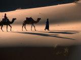 Camel Caravan Crossing Dunes  Erg Chebbi Desert  Morocco