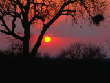 African Sunset  Kruger National Park  Kruger National Park  Mpumalanga  South Africa